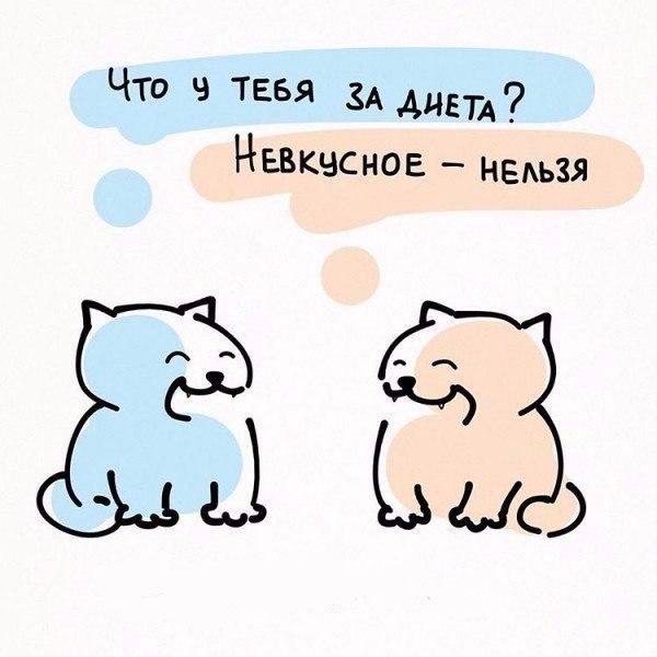 Милые картинки с котиками