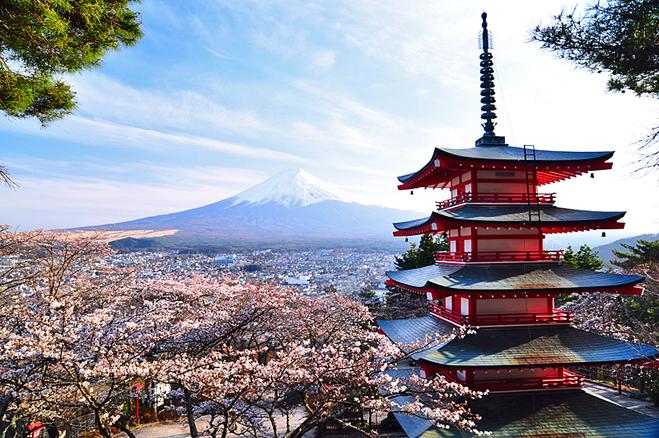 Сакура в Японії