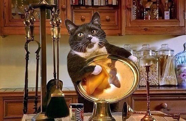 Мне срочно нужен такой кот