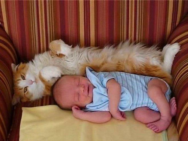 Фотоприколы коты и младенцы