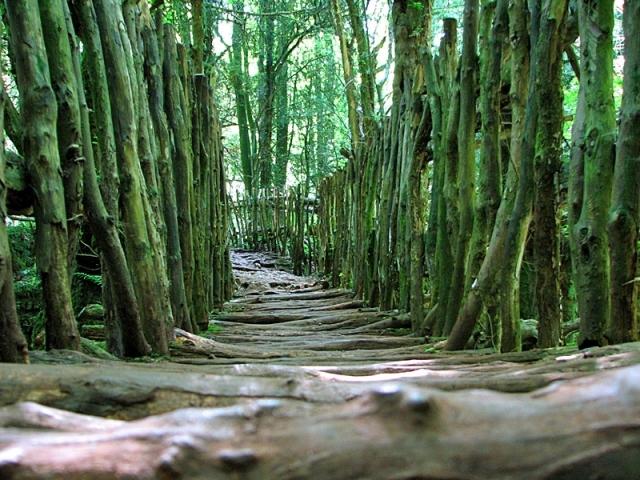 Пазлвуд - загадковий ліс