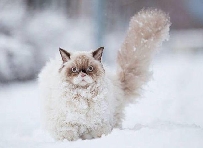 Let it snow: до кінця тижня в Україні очікується сніг