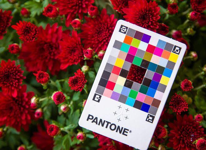 Главные цвета 2021 по версии Института цвета Pantone