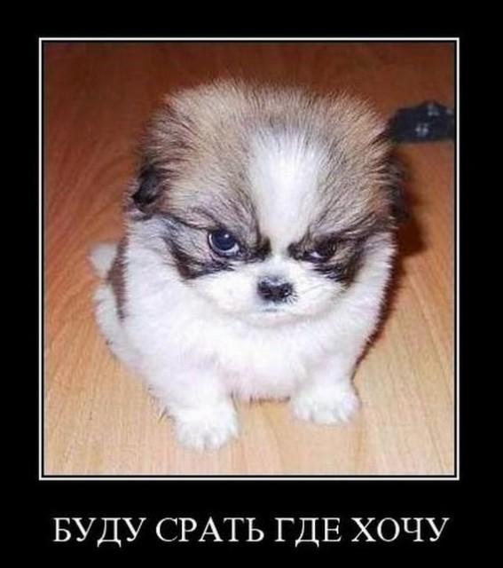 Ржачные демотиваторы про собак