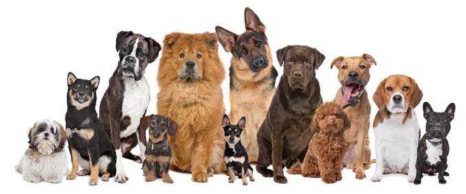 Незвичайна робота фрілансера: розпізнати породи собак по фото