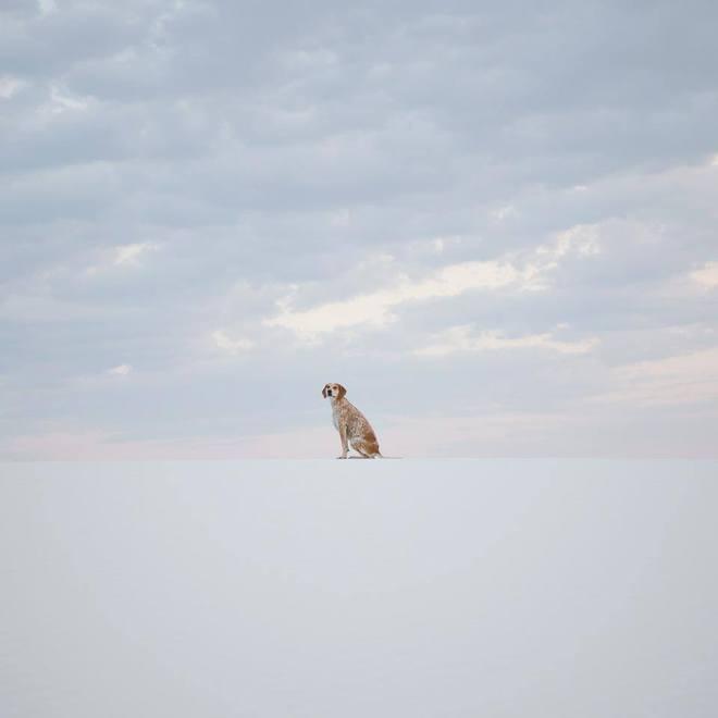 Собака Мэдди