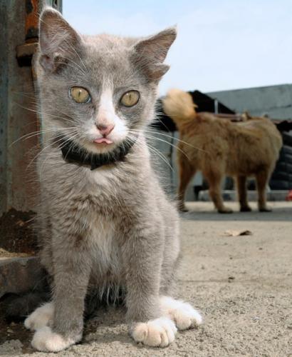Языкатый кот