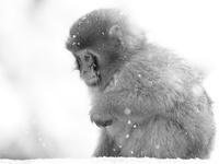 Обезьянка в снегу