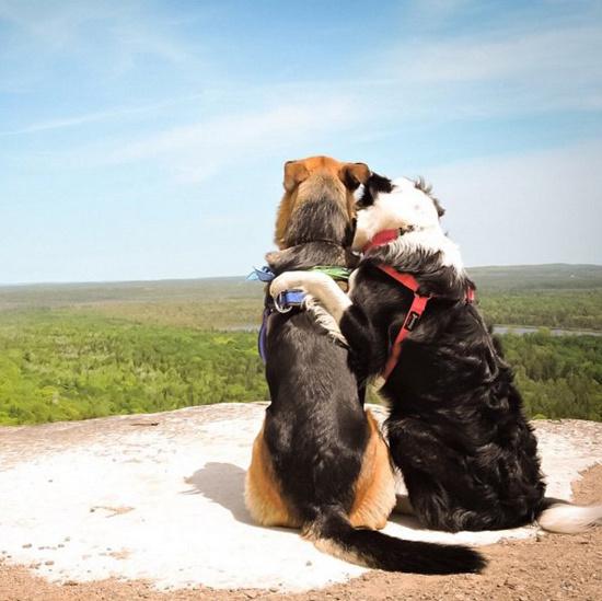 Лотти и Гризли - собаки обнимаки