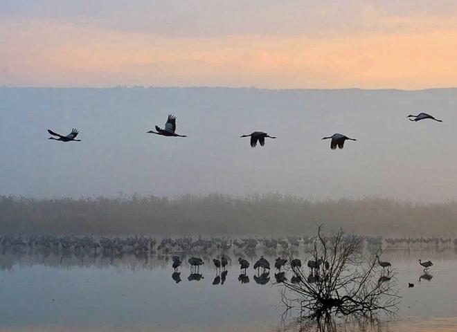 Подорожуємо слідом за птахами: міграція журавлів