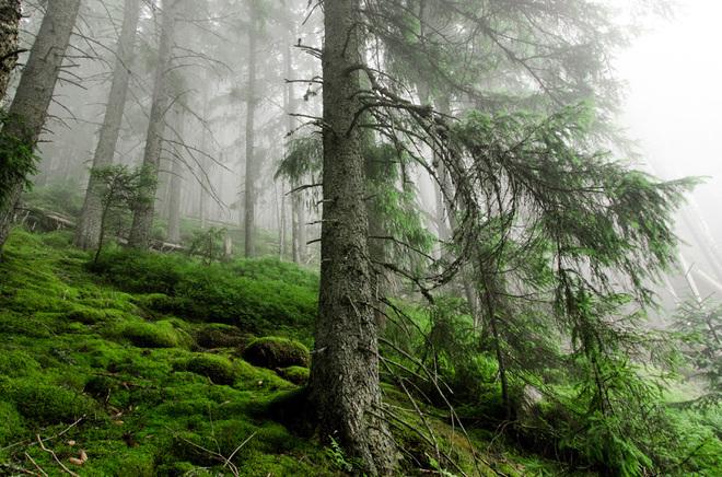 Руслана леса