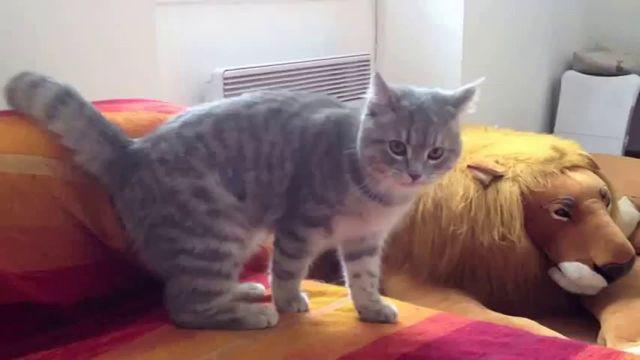 Cats doing tricks video