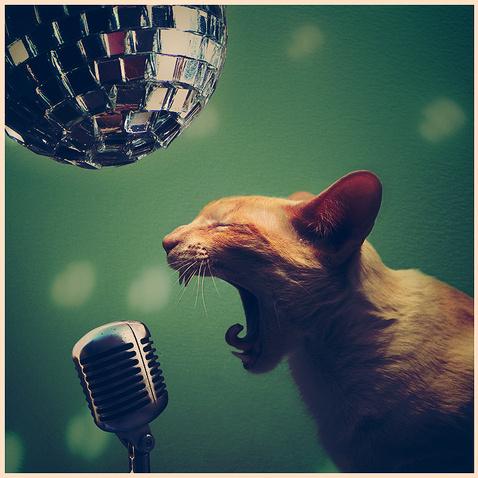 В джазе только кошки