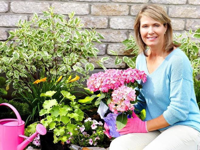 Как полить цветы, Уход за комнатными растениями