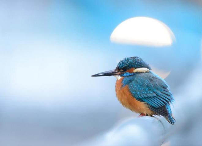Bird Photographer Of The Year 2019