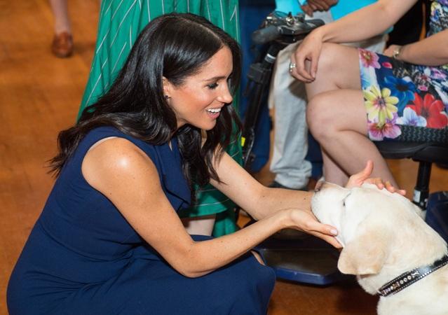 Меган обожает собак
