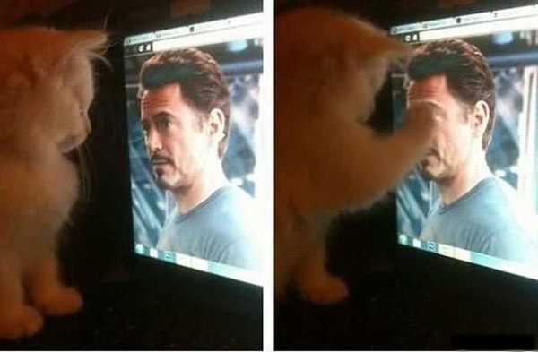Даже котэ его любят