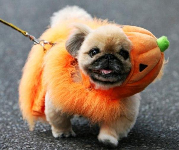 Няшки на Хэллоуин