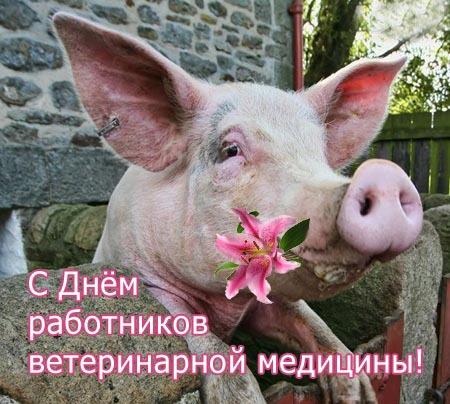 Поздравления с днём ветеринарного работника прикольные