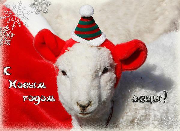 Милая открытка к Новому году овцы