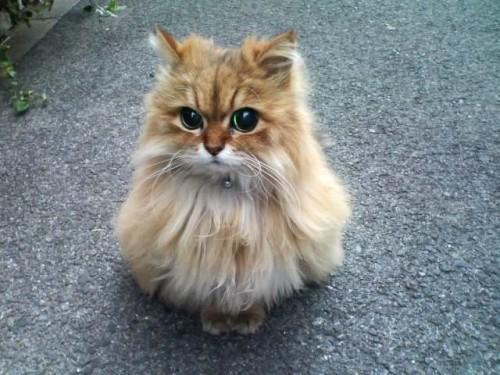 Милейший котик в мире!