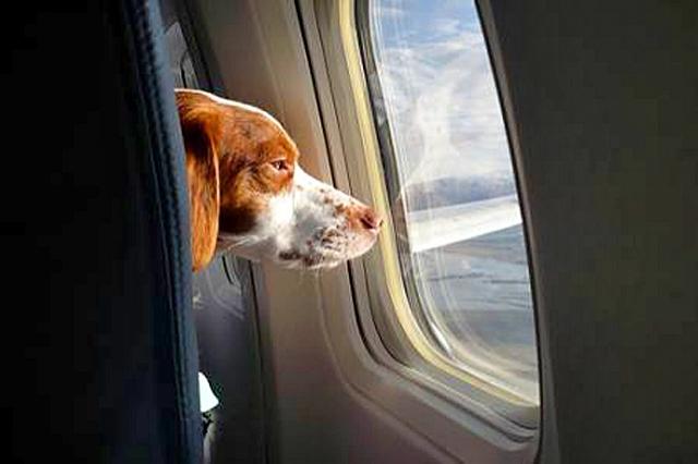 Как путешествовать с животными