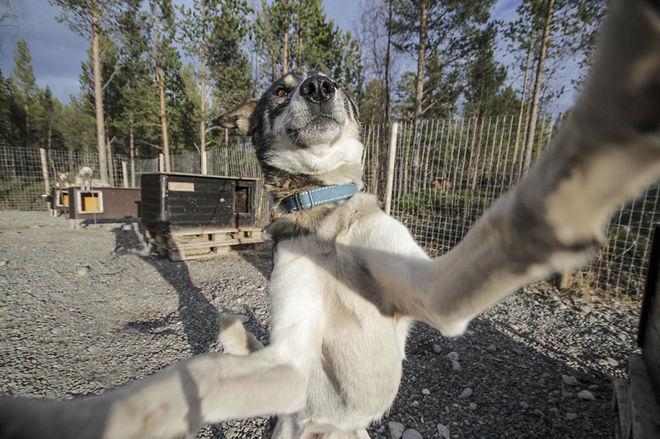 Собаки, которые любят селфи