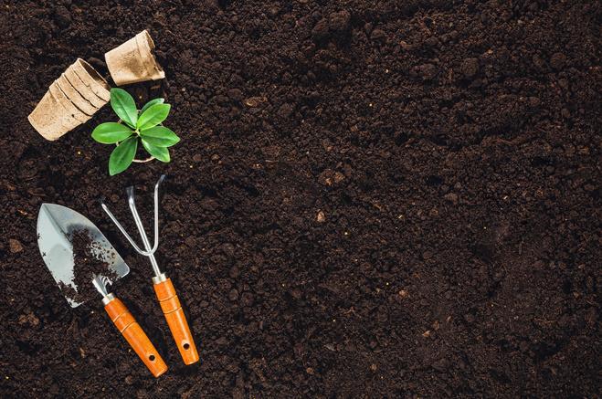 Какую зелень посадить дома для салатов