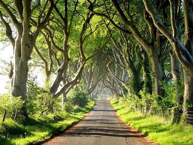 Буковый тоннель (Ирландия)