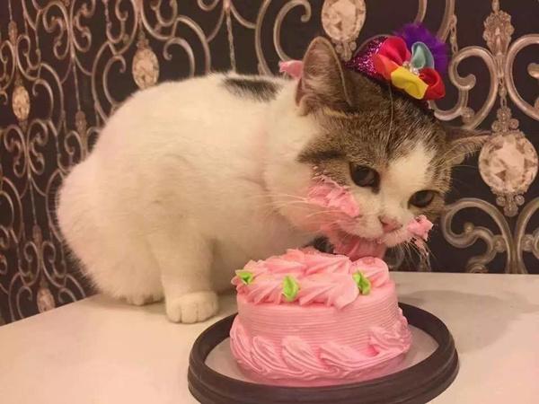 У меня сегодня День рождения? Круто!