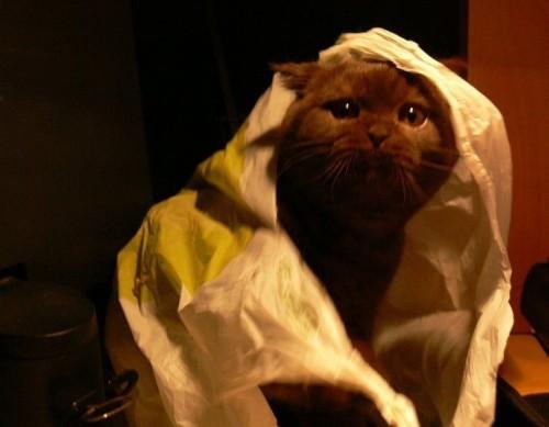 Коты - это гангстеры:)))