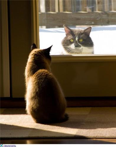 Приколы про котов