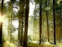 Солнечные лучики среди деревьев