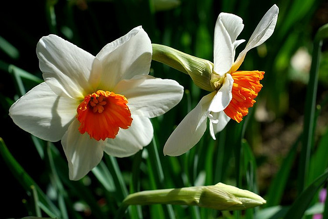 цветы-убийцы
