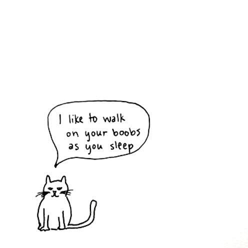 Коту есть, что сказать тебе!