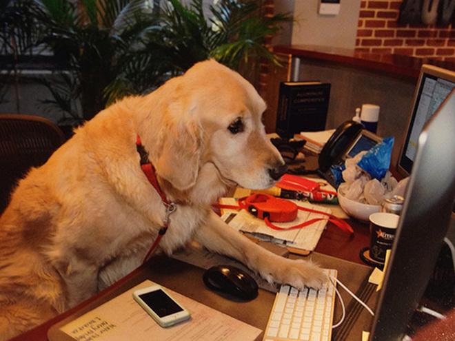 Возьми собаку с собой на работу