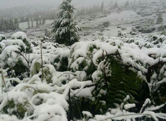 Карпаты снег