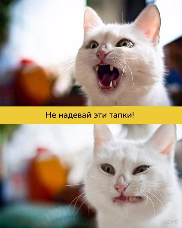 Богатая мимика котиков
