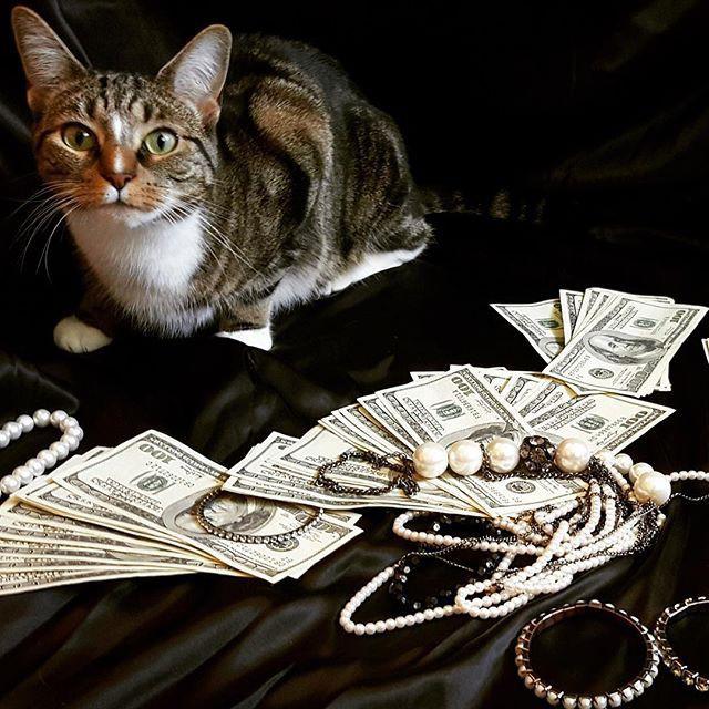 Котики, которые любят деньги