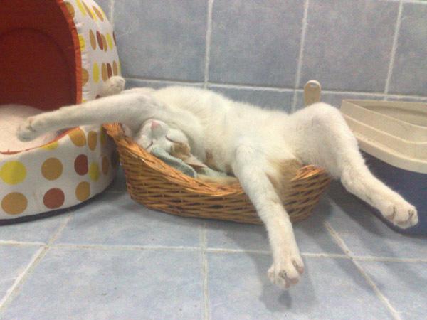 """Мимимишная подборка """"Спящие котята"""""""