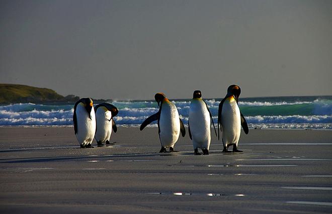 Картинки по запросу огненная земля пингвины фото