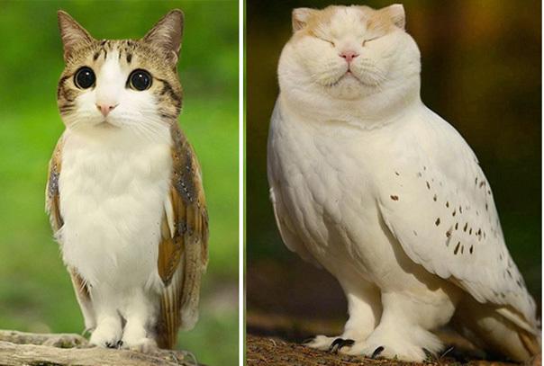 Эти смешные котосовы