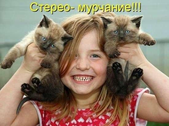 Прикольная картинка про котов