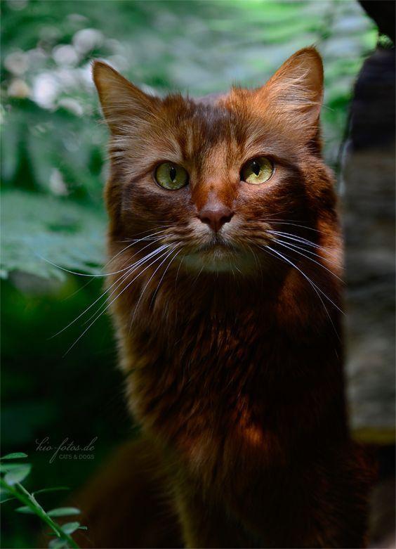 Вуса, лапи і хвіст: найкрасивіші коти в світі