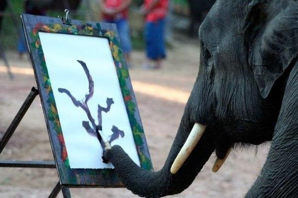 То неловкое чувство , когда слон рисует лучше тебя