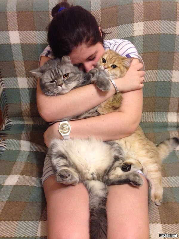 Айлурофилия — патологическая привязанность к кошкам