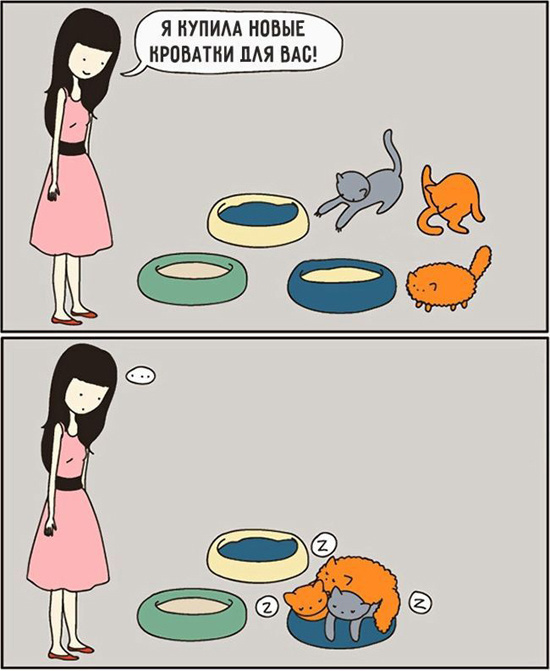 Забавные комиксы с котами
