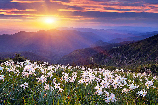 ТОП-7 самых красивых цветочных долине мира