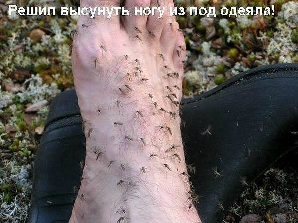 Лето пришло. Комары почувствовали запах крови