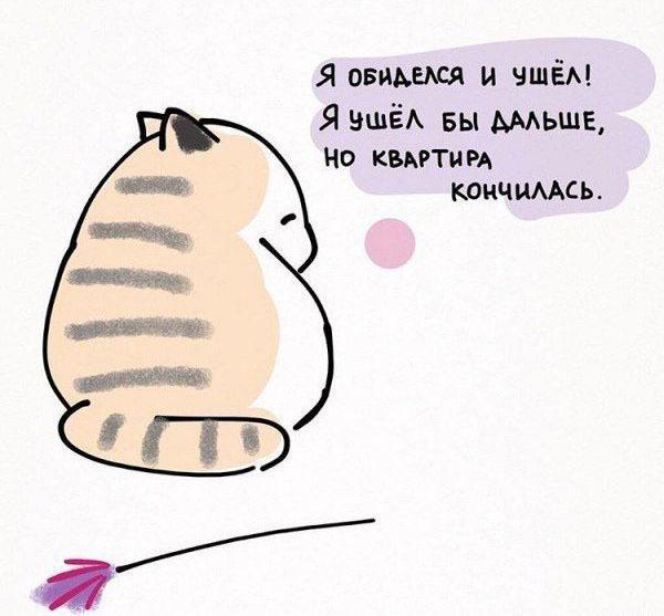 10 полезных советов от котика. Как надо относиться к жизни